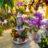 Kwiaciarnia MAJA w Spar – kwiaty, bukiety, wiązanki, strojenie